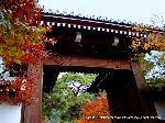 洛陽六阿弥陀めぐり : 山門