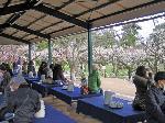 梅見 梅 花暦 : 北野梅苑の老松さんの茶店