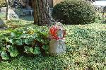 梅見 梅 花見 : 境内にはベンチが用意されている。日向ぼっこのお年寄りが掛けられたのだろうか、お地蔵さんが頬被りをしている。