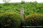 文化遺産 お土居 石碑 : 樹木は刈られ整形されている御土居跡