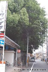 文化遺産 お土居 : 道路に御土居は切断されている