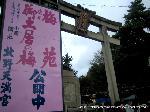 文化遺産 お土居 梅花祭 : 御土居の梅・梅苑公開