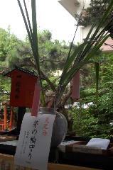 夏越祓 茅の輪くぐり : 茅の輪守り