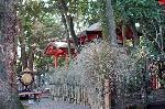 夏越祭 祇園祭 : 疫神社前の茅の垣