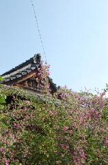 花暦 萩 お彼岸 秋分の日  : 地蔵堂の前の萩