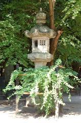 花暦 萩 お彼岸 秋分の日  : 拝殿前の左右一対に植栽されている