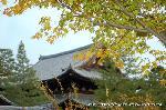 紅葉 秋の特別公開 : 聚楽院から法堂を眺める