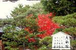 紅葉 秋の特別公開 紅葉狩