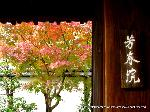 紅葉 秋の特別公開 紅葉狩 : 二つ目の門
