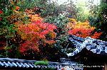 京都非公開文化財特別拝観 紅葉
