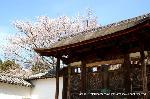 花見 : 修復前平成20年当時の唐門