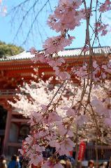 花見 : 仁王門前